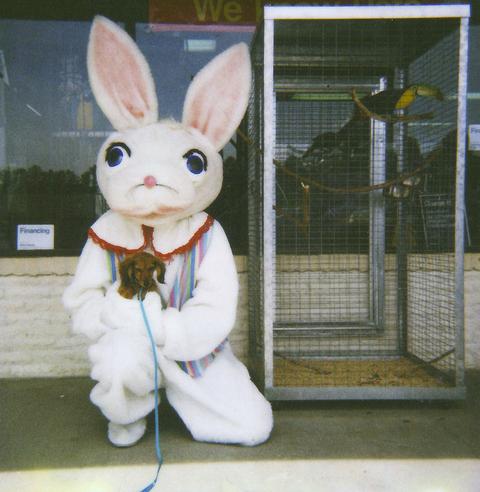 Where's the Ransom bunny