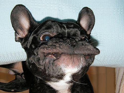 [Image: meth-puppy.jpg?w=500]
