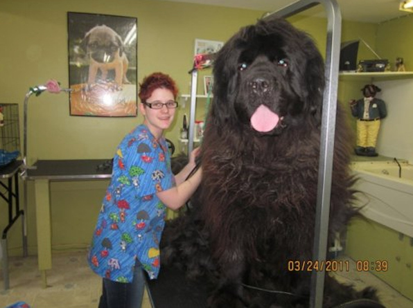 http://coltmonday.files.wordpress.com/2011/04/that-is-a-very-large-dog.jpg